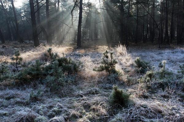 Foto van Nationaal Park Hoge Veluwe, Nederland