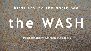 Slideshow the Wash, Birds around the North Sea