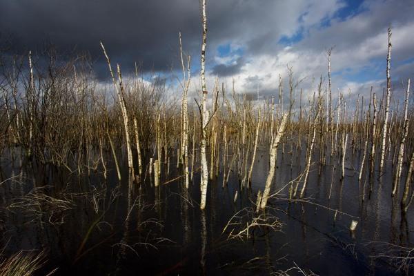 Foto van het Bargerveen, Drenthe
