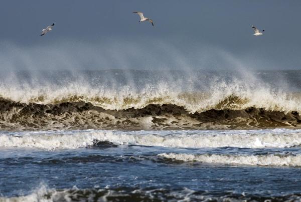 Foto van Stormmeeuwen, Ameland
