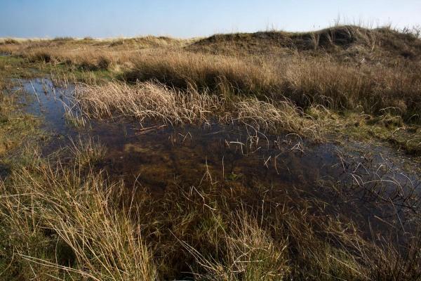 Foto van een duinvallei, Texel, Nederland