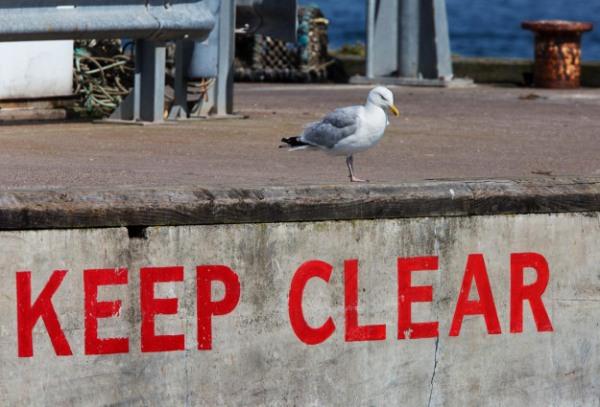 Photo of aHerring Gull, Seahouses, England, United Kingdom.