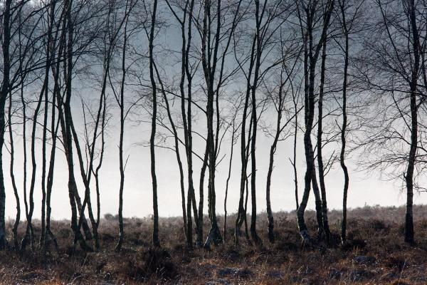 Foto van natuurgebied Planken Wambuis, Gelderland