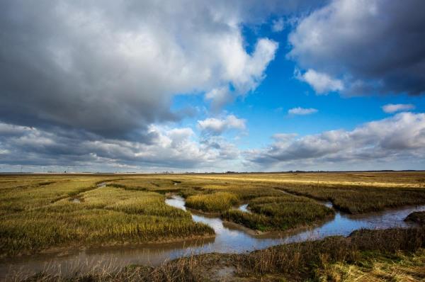 Foto van een schor, Krabbenkreek, Tholen, Zeeland