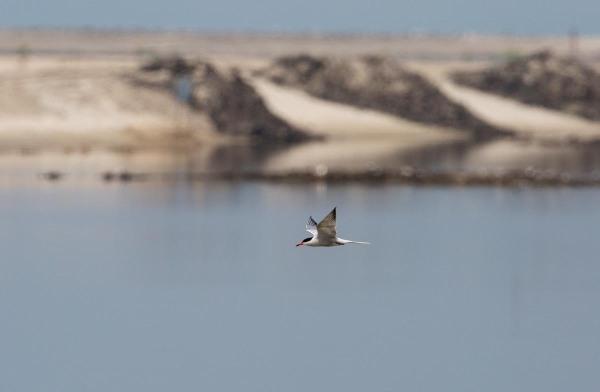 Foto van een Visdief, Marker Wadden