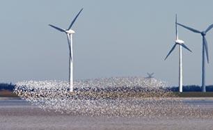 Foto van een zwerm vogels boven de Dollard.