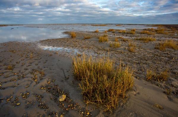 Foto van Mandø, Denemarken