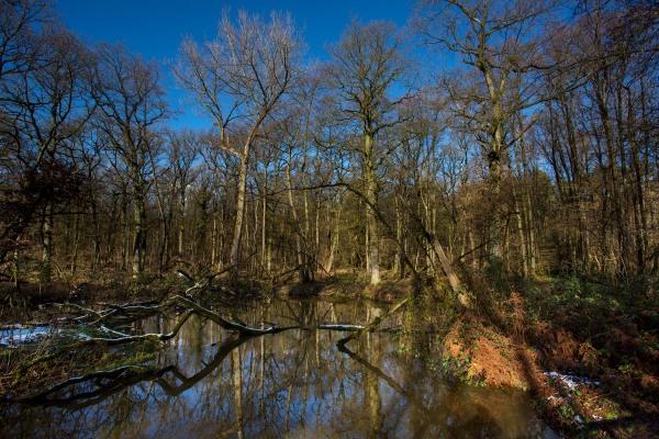 Foto van de Leubeek, Leudal, Limburg