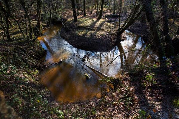 Foto van de Zelsterbeek, Leudal, Limburg