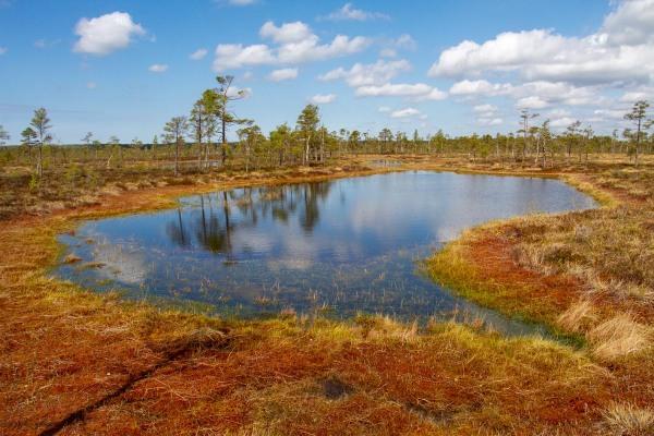 Foto van Nigula bog, Estland