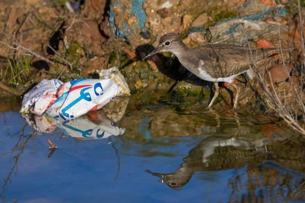 Foto van een Oeverloper, Larache, Marokko