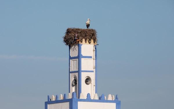 Foto van een Ooievaar, Oualidia, Marokko