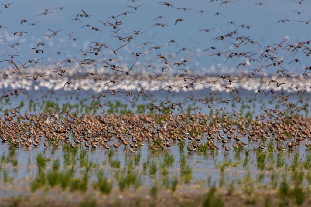 Foto van krombekstrandlopers en bonte strandlopers, Westhoek, Friesland